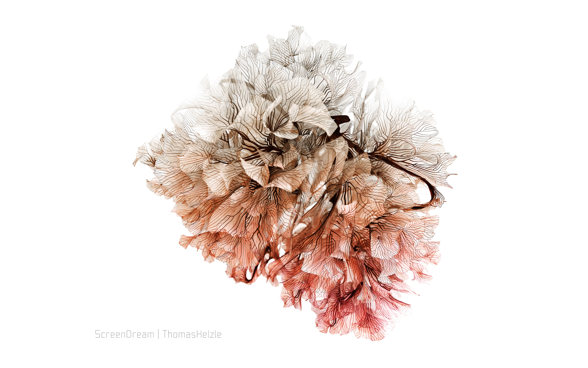 Generative Coral in SideFX Houdini and Redshift